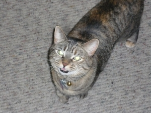 Annie Meowing