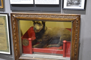 One of the first firehouse dogs who showed up one day.