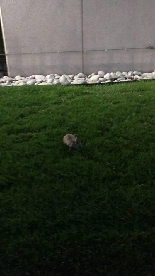 Bunny Rabbit in Denver